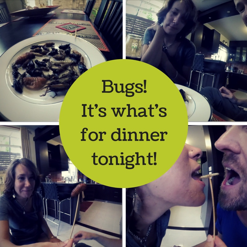 Bugs! It's what's for dinner tonight!