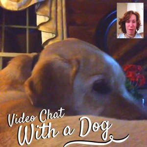 Video chat with a dog