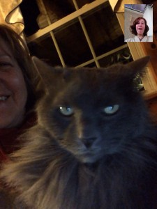Video chat with Fluffy
